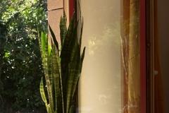 Quelques plantes assainissantes pour la décoration